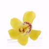 Picture of Design Your Own Cymbidium Orchid Boutonniere