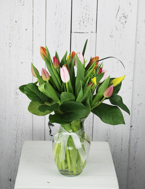 Picture of Tulips for Christmas