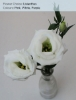 Lisianthus - Pink, White, Purple,