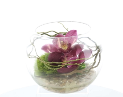 Picture of Orchid Serenity