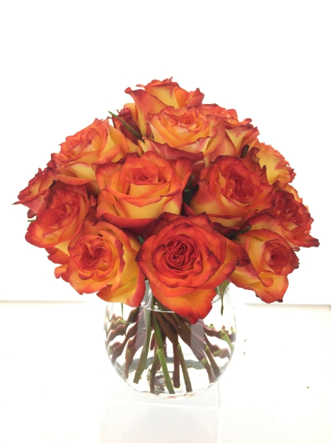 Picture of 24 Mystery Surprise Roses