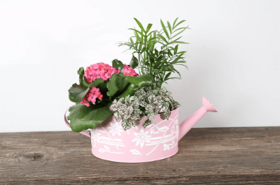 Picture of Mothers Day Planter - Watering Can